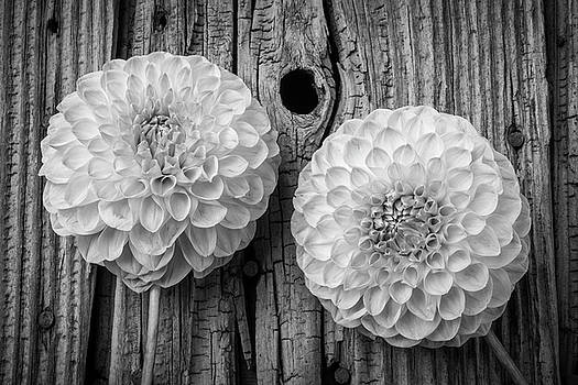 Two Black And Whte Dahlias by Garry Gay