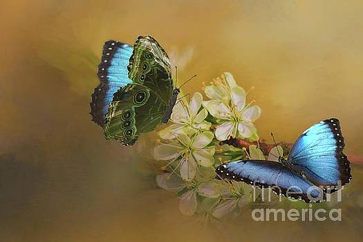 Two Blue Morpho Butterflies on White Spring Flowers by Janette Boyd