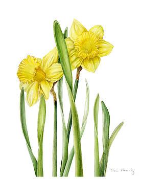 Two Daffodils by Fran Henig