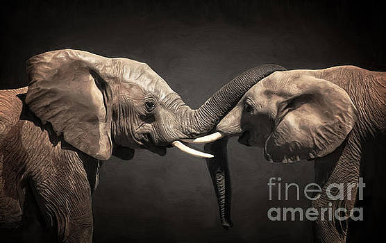 Angela Doelling AD DESIGN Photo and PhotoArt - Two Elephants