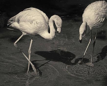 David Gordon - Two Flamingos Toned