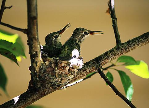 Xueling Zou - Two Hummingbird Babies in a Nest 5