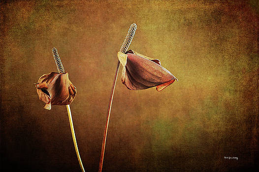 Two Lillies in Late Bloom by Randi Grace Nilsberg
