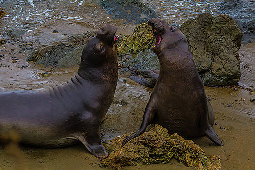Two Males Fighting On Beach by Garry Gay