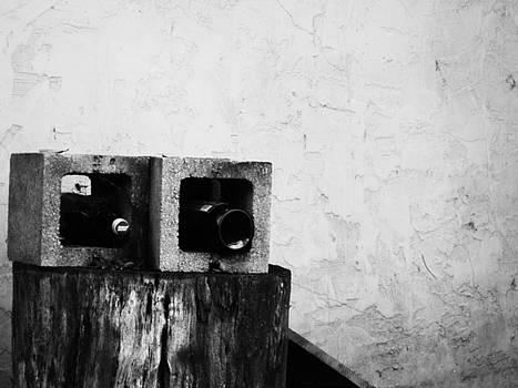 Two On The Stump by Jeff DOttavio