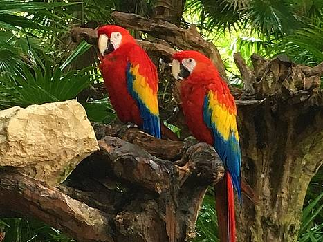 Two Parrots by Vijay Sharon Govender