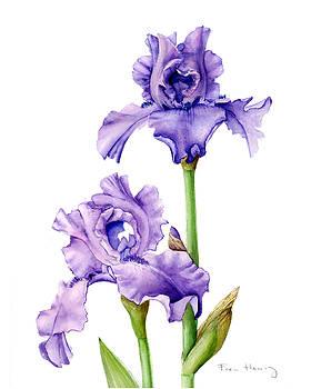Two Purple Irises by Fran Henig