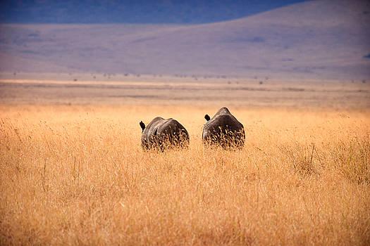 Adam Romanowicz - Two Rhino