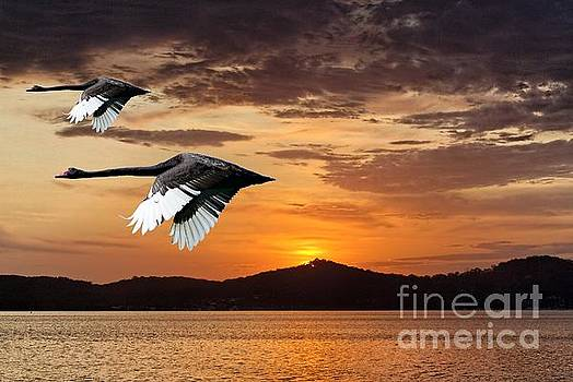 Two Swans at Dawn.  Art photo digital download and wallpaper screensaver. DIY Designer Print. by Geoff Childs