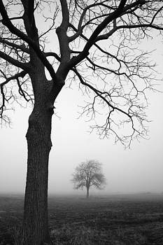 Two Trees by Kathy Stanczak