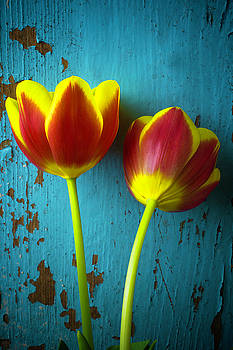 Two Tulips Against Blue Wall by Garry Gay