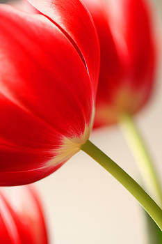Two tulips by Mary McGrath