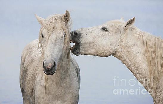 Two White Horse Friends by Carol Walker