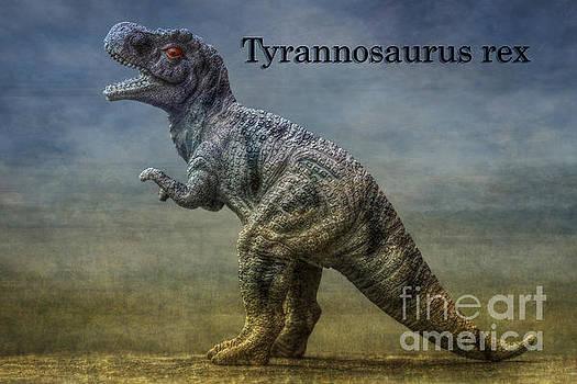 Randy Steele - Tyrannosaurus rex