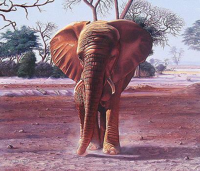 Un elefante demasiado cerca by Sergio Gaspar