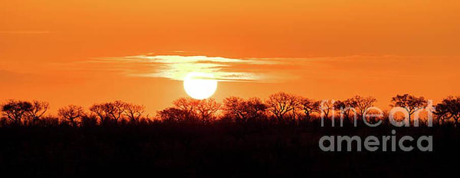 Under African skies by Jane Rix