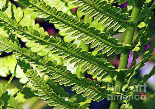 Under Fern by Betsy Zimmerli