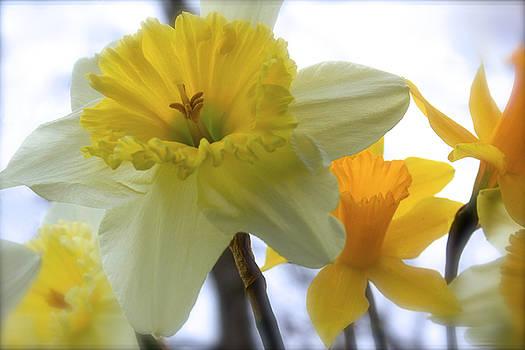 Under The Daffodils by Carolyn Wright