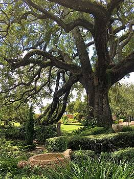 Under the Old Oak Tree by Kay Gilley