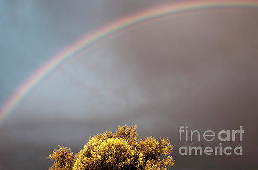 Under The Rainbow by Janie Johnson