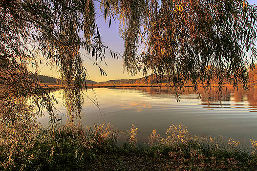 Under the Willow by Victoria Winningham