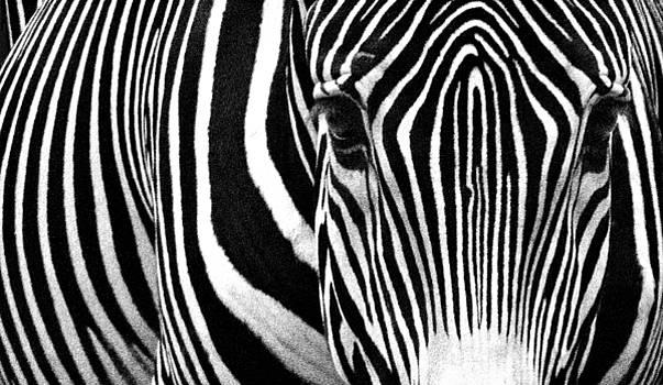 Unique Fingerprint  by Donna Pagakis