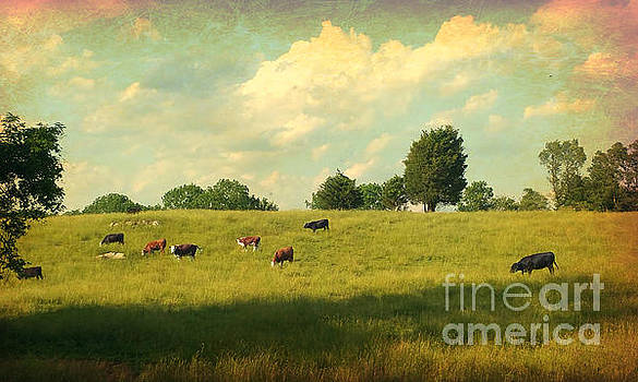 Until The Cows Come Home by Beth Ferris Sale