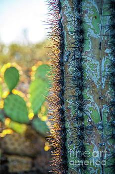 Up Close Cactus by Steve Whalen