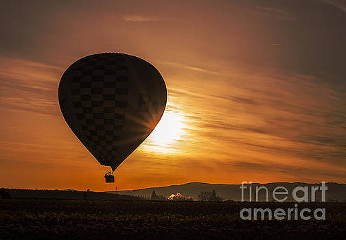 Up Up and Away by Billie-Jo Miller