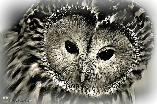 Ural Owl by Bev  Brown