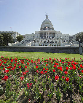 US Capitol and tulips by Jack Nevitt