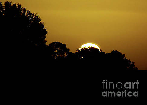 Vacation Sunrise by D Hackett