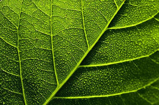 Vain Leaf by Sarita Rampersad