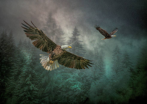 Valley of The Eagles. by Brian Tarr