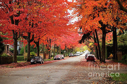 Vancouver Autumn in the City by Maria Janicki