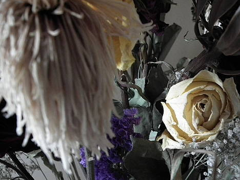 Vanilla Beauty by Deborah MacQuarrie