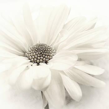 Vanilla Ice by Darlene Kwiatkowski