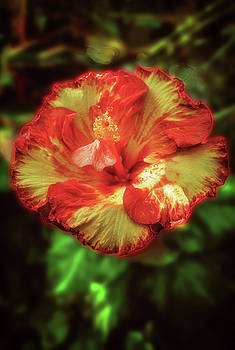 Variegated Flower by Joseph Hollingsworth