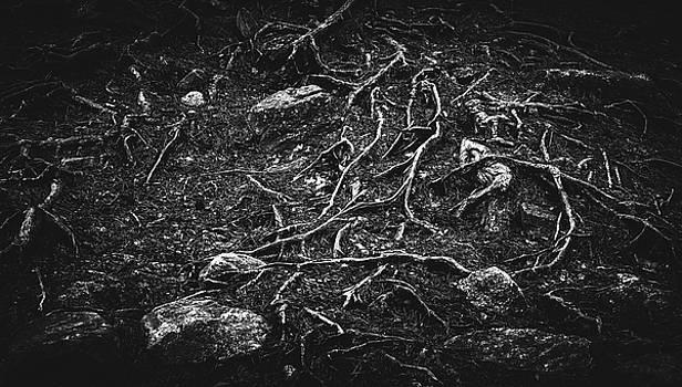 Vascular by Matti Ollikainen