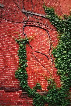 Veins by Rodney Williams