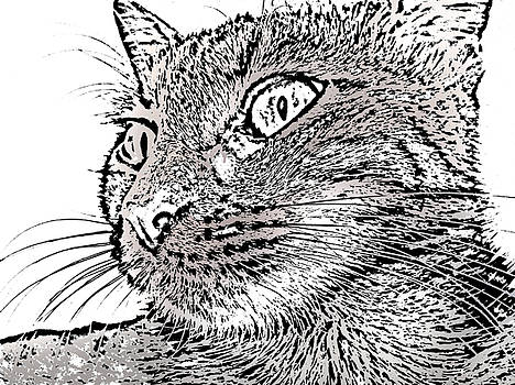 Venny the cat by Iliyan Stoychev