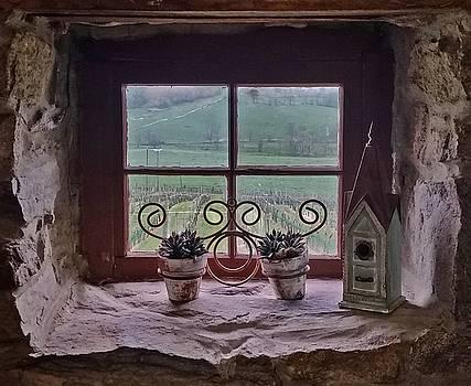 Ventana de Vina by Suzanne Stout