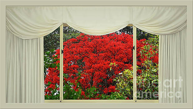 Vibrant Red Blossoms Window View by Kaye Menner by Kaye Menner