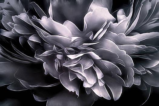 Vibrations - Winter by Darlene Kwiatkowski