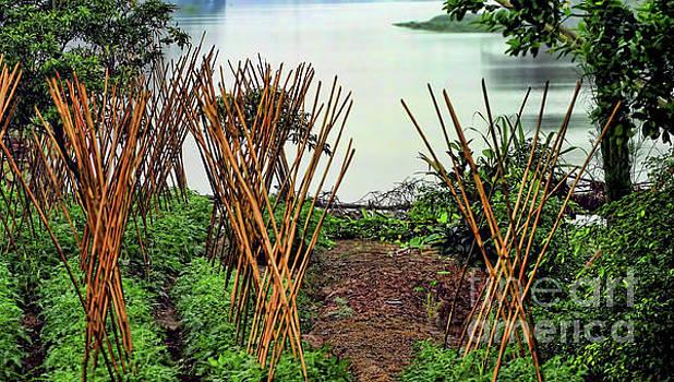 Chuck Kuhn - Vietnamese Garden