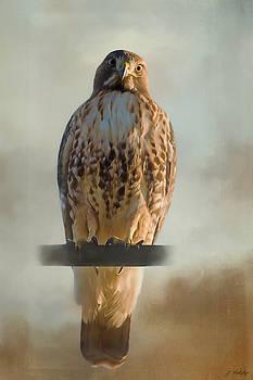 View Life - Hawk Art by Jordan Blackstone