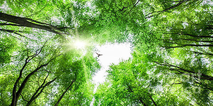 View through tree canopy with bird soaring by Simon Bratt Photography LRPS