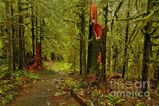 Views Along The Sol Duc Falls Trail by Adam Jewell