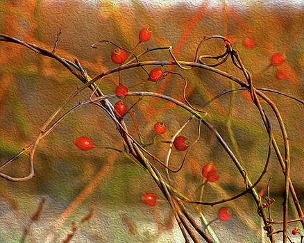 Lynda Lehmann - Vines and Winterberries