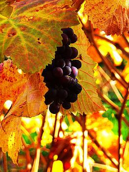 Xueling Zou - Vineyard 20